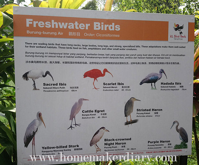 kl-birdpark-freshwater-birds