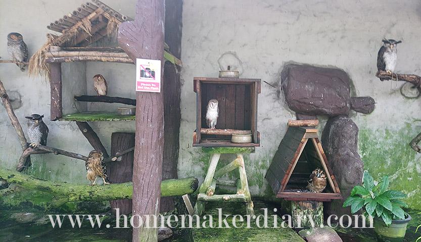 kl-birdpark-owls