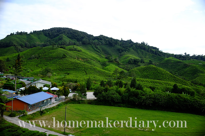 sg-palas-boh-tea-plantation-1