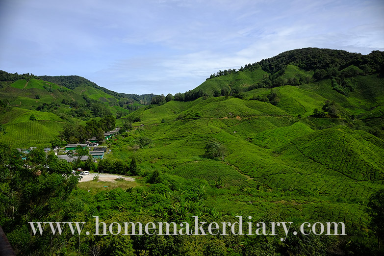sg-palas-boh-tea-plantation-w12
